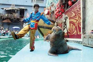 大连圣亚海洋世界门票_圣亚表演时间_功夫海象杰克逊舞