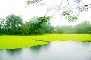 西溪湿地门票 西溪湿地价格 西溪湿地团购多少钱