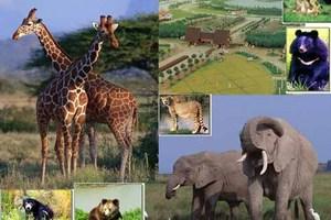 上海野生动物园含车游