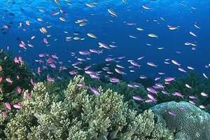 大连圣亚海洋世界学生票||大连圣亚海洋公园门票团购