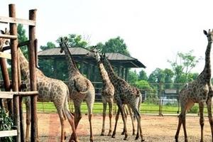 长沙生态动物园门票 动物园门票预订 动物园春游价格