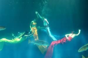 青岛旅游景点门票 青岛海底世界优惠门票和演出时间