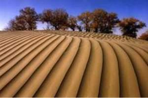 [新疆]塔克拉玛干沙漠--胡杨林秋色