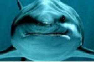 青岛海底世界门票团购票|海洋馆门票|著名海底世界y