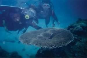 三亚六日阳光海岛游,分界洲、大小洞天度假游-三亚蜜月游攻略