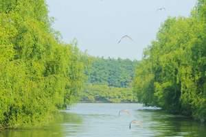 广州有哪些地方好玩的,南沙湿地公园、十四涌十九涌海鲜街一天游