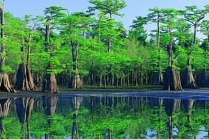 【长沙亲子游】千龙湖湿地植树、放鸢欢乐亲子一日_团队优惠价格