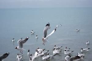 [青海]国庆十一燕郊青海双卧六日游_北京出发青海旅游_青海湖