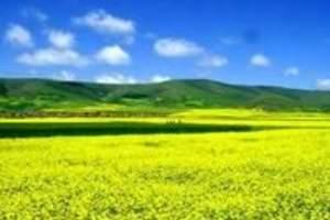 天津到希拉穆仁草原旅游_成吉思汗陵_呼和浩特市双卧六日游