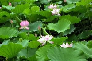 烟花三月下扬州之――《春江花月夜·唯美扬州》特惠扬州二日游