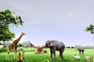 扬州到杭州西湖-野生动物世界-西溪湿地-锦绣风水洞纯玩2日游