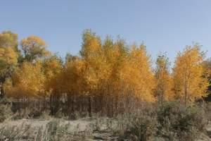 【新疆深度摄影】秋季喀纳斯沙漠胡杨13日深度摄影创作团