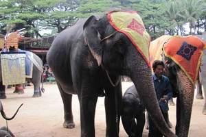 青岛暑期去泰国旅游度假团 泰国一地6日游 国际五星住宿