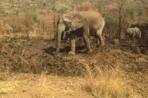 北京到南非旅游:疯狂动物城·南非暑假亲子8日半自助游