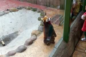 绍兴出发-杭州野生动物园百兽狂欢亲子一日游