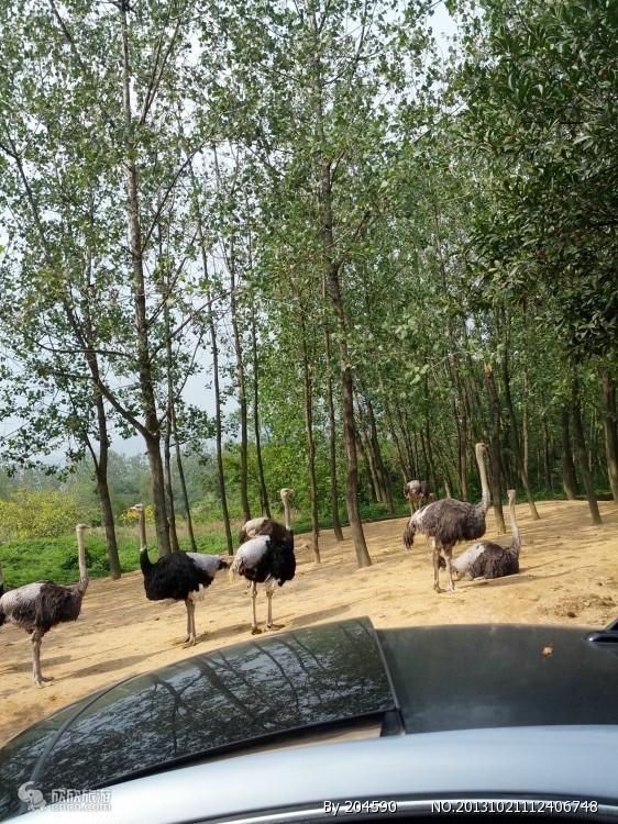 杭州野生动物园介绍_野生动物园简介