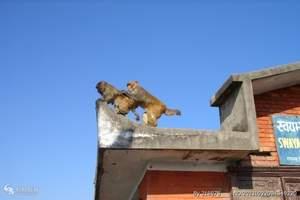 青岛到西藏旅游_藏东香巴拉—之旅拉萨林芝纳木错 双卧十日游