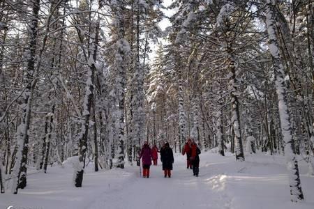 哈尔滨到东升雪谷穿越雪乡、亚布力滑雪三日游_亚布力雪乡雪谷