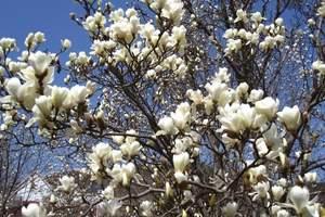 五一葫芦岛到大连游<大连樱花节赏樱花、发现王国、市内二日游>