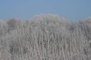 冬天大连到哈尔滨旅游攻略_哈尔滨市俄罗斯小镇3日游_天舒国旅