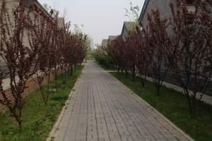 天津到杨柳青庄园旅游团、杨柳青庄园休闲一日游、赠送人身意外险