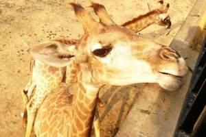 大连野生动物园|大连森林动物园团购套票|大连森林动物园一日游