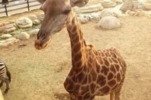 大连森林动物园、圣亚海洋世界二日游