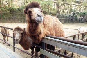 沈阳野生森林动物园一日游|棋盘山动物园门票团购|棋盘山动物园