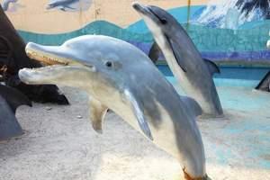 大连旅游_大连圣亚海洋世界一日游_海底隧道海豚湾之恋功夫海象
