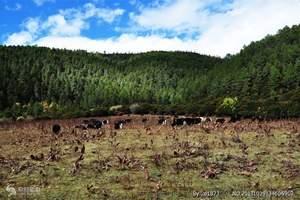 普达措国家森林公园