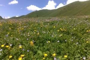 新疆那拉提草原旅游|乌鲁木齐出发到伊犁那拉提草原汽车品质四日