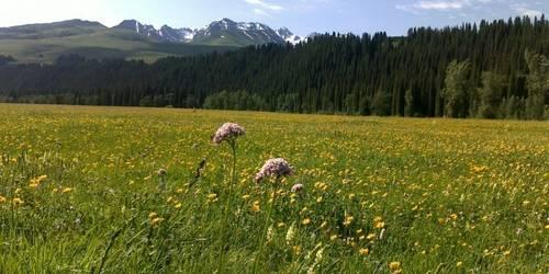 伊犁大草原