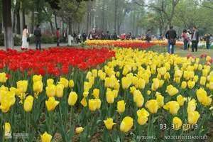 武汉植物园门票(预订成功2小时后方可取票入园)