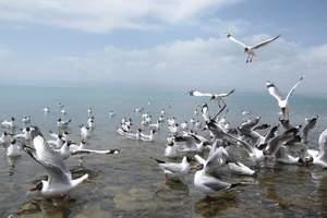 观鸟季---西宁出发赴青海湖、鸟岛环湖一日游全程纯玩无购物