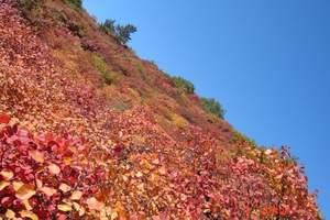 石家庄到仙台山赏红叶旅游 仙台山跟团一日游