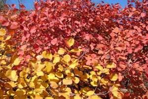 秋季石家庄到仙台山一日游|石家庄到仙台山旅游线路