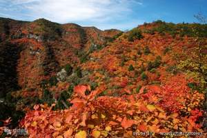石家庄到仙台山赏红叶一日游 石家庄到仙台山赏红叶旅游团