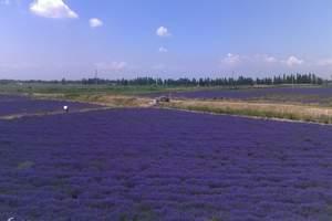 大连薰衣草多少钱、大连薰衣草+小黑山一日游、五月份看薰衣草