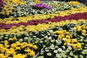 洛阳跟旅行社去开封看菊展|洛阳到翰园碑林一日游