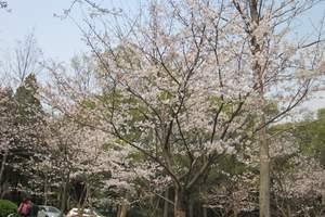 【春暖花开】清镇玉兰花海-平坝樱花-小河湾双汽一日游