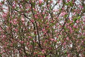 长沙到武汉高铁赏樱花、观黄鹤楼纯玩二日游