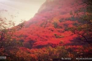 重庆到城口大巴山彩叶、中国亢谷二日游
