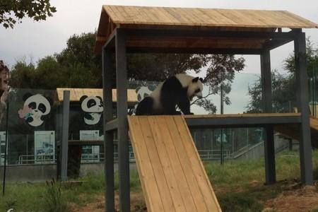 带孩子去哪玩 威海野生动物园 赤山大佛二日游