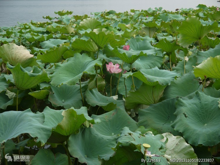 杭州西湖登雷峰塔西溪湿地【赠送宋城乐园】单高单动三日游