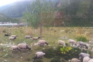 西安去西藏日喀则旅游(纳木错/布达拉宫)西藏日喀则双卧八日游