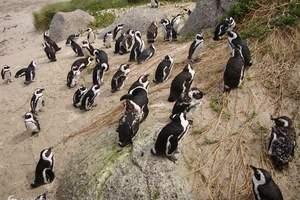 淄博国际旅游公司到 南极企鹅尊贵休闲巡游26天团荷美邮轮