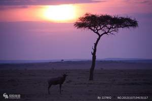 深圳出发去非洲肯尼亚旅游 到肯尼亚10天摄影之旅(安博塞利)