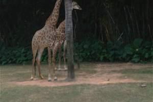 合肥到广州长隆跟团游_长隆野生动物园、欢乐世界双飞4日游