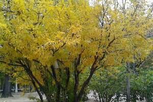 泰安出发到桂林阳朔冠岩银子岩双飞五日游||泰安旅行社推荐