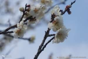 九江出发到日本双古都双温泉希尔顿之旅七日游